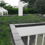 Sedum & Wildflower | Green Roofs
