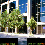 CU Tree Soil | Tree-growth-Performance