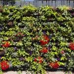 Green Wall - external system2