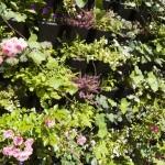 Green Wall - external system